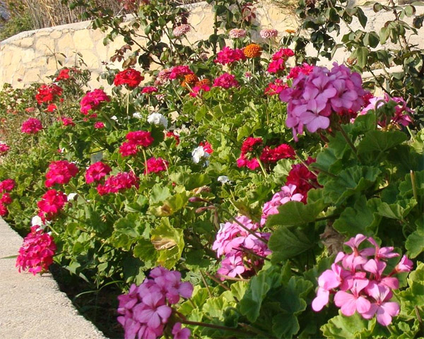 Средиземноморский сад