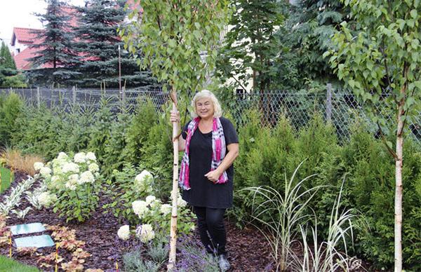 Березы в саду: когда и как их сажать?