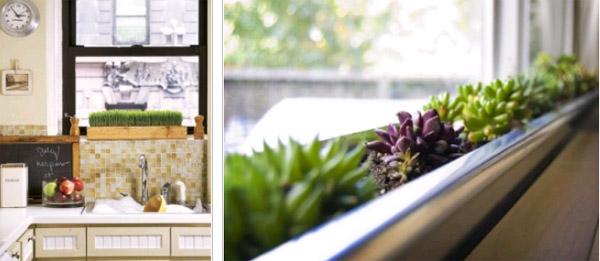 Декоративные растения на окне
