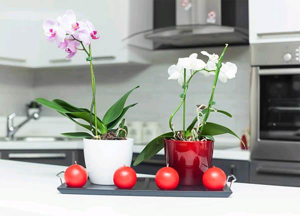 Украшение дома живыми цветами