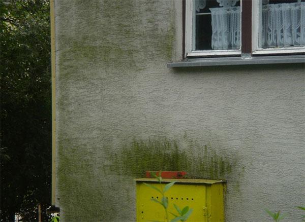 Как удалить плесень и грибок с фасада дома?